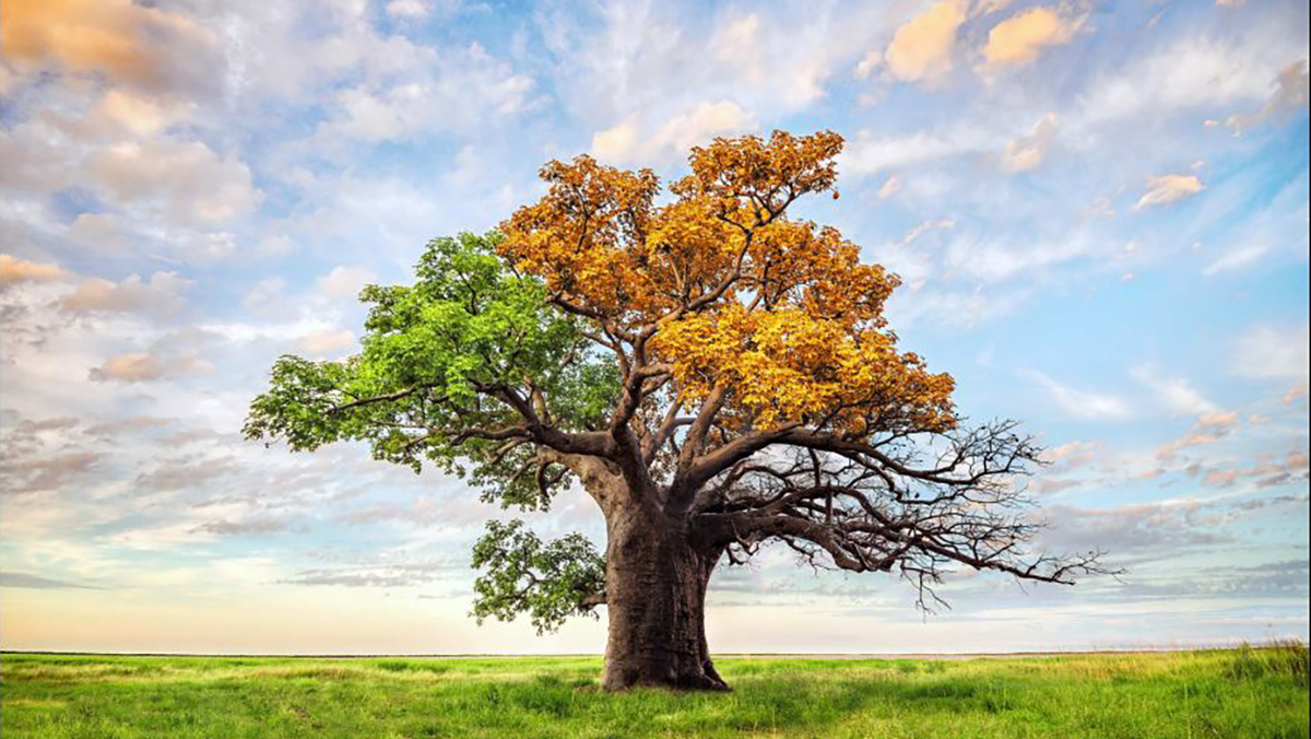 Large tree in a grassy field with large sky